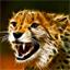 SwiftKitten's avatar