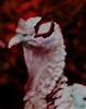 TurkeysX's avatar