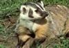 badgermilk69's avatar