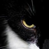 garnok's avatar
